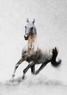 Horses - Andreas Lie