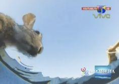 Se Vuelve Viral Video De Animales De Una Granja Bebiendo Agua