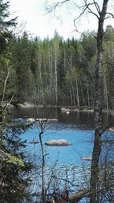 Blogi  OMAISAPU.fi      : Joutsen, valkoposkihanhi upealla Liesjärvellä kevä...