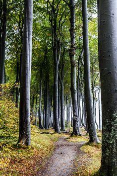 'Küstenwald'+von+Angelika+Bentin+bei+artflakes.com+als+Poster+oder+Kunstdruck+$16.63