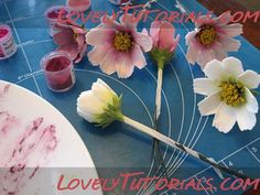 МК лепка Космея цветок-Gumpaste (fondant, polymer clay) cosmo (Cosmos) flower making tutorial - Мастер-классы по украшению тортов Cake Decorating Tutorials (How To's) Tortas Paso a Paso