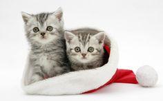 nice christmas kitties wallpaper Check more at http://www.finewallpapers.eu/pin/3237/
