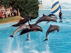 Enjoy a day out at the many attractions of the Zoomarine. Swimming with the dolphins can also be arranged. http://www.zoomarine.pt/en/