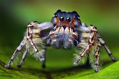 nice....  and imagine that crawling on your shoulder. Now, you have to... its like you can sense it crawling....