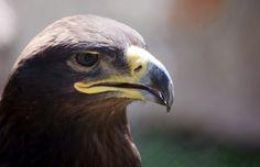 eagle wallpaper widescreen retina imac