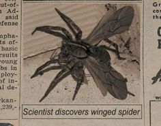 The story of the winged, flying spider is fake, as is the photo in circulation.  Arachnids do not have wings.