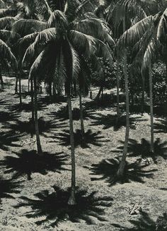 Palm tree shadow patterns