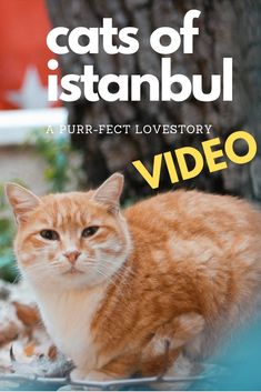 I'm not a cat person but this city made me to one! It's not sure how many street cats there are in Istanbul but you will not get around without meeting a ton. Influencer, Istanbul, Street, Cats, Animals, Gatos, Animales, Kitty Cats, Animaux