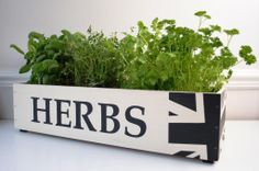herb pots - Google Search