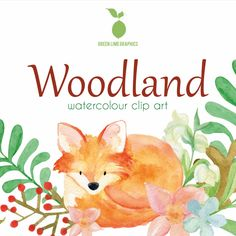 Forest Animals, Woodland Animals, Cute Animal Clipart, Watercolor Animals, Baby Animals, Wildlife, Clip Art, Baby Pets, Woodland Creatures