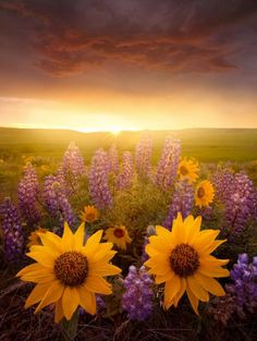 Spring Blooms Copyright Lijah Hanley