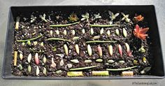 Lay the dried petals on cactus potting soil