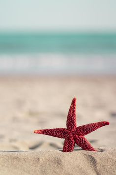 """drxgonfly: """"Red starfish on the beach(by Tony Marinov) / """" Whats Wallpaper, Ocean Wallpaper, Summer Wallpaper, Cute Wallpaper Backgrounds, Pretty Wallpapers, Nature Wallpaper, Iphone Wallpaper, Beach Pictures, Nature Pictures"""