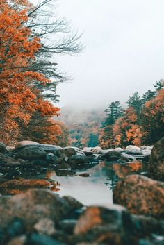 Here are 14 awesome fall road trip ideas within the US, guaranteed to inspire you this fall to do the greatest road trip of your life! Fall Photos, Nature Photos, Travel Sights, Travel Destinations, Cute Fall Wallpaper, Online Travel Agent, Travel Tickets, Most Beautiful Images, Summer Landscape