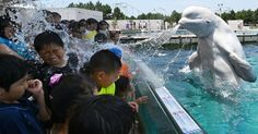 Une-beluga-eau