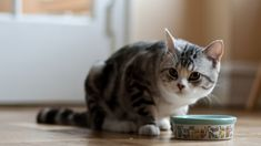 Feed your cat the best cat food brand because it deserves only the best. Read my guide to ensure your feline friend#39;s dietary health now!