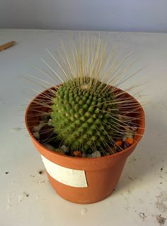 Cactus and Succulents 928 Cacti And Succulents, Cactus Plants, Garden Plants, Succulent Images, Cactus Y Suculentas, Planting Flowers, Flora, Planter Pots, Green