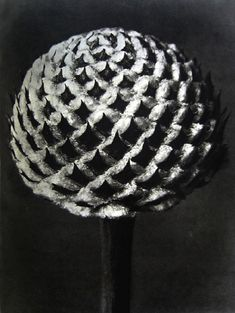 Karl Blossfeldt was born on June 13, 1865 in Schielo, a central German town within the Harz Mountains. At about sixteen, Blossfeldt started an apprenticeship that formed his basic understanding of visual arts, working as a caster in an ironworks foundry.