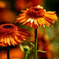 fotos de ramos de flores preciosas