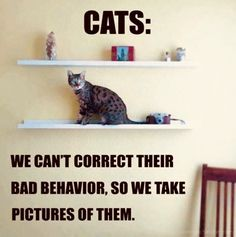 New Funny Cute Quotes Kitty Cats Ideas Funny Baby Quotes, Funny Cat Memes, Cat Quotes, Funny Cats, Funny Animals, Cute Animals, Funny Humor, Funny Sayings, Baby Sayings