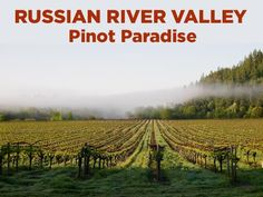 The Russian River Valley is probably the best place to grow Pinot in California. What makes this Sonoma region so perfect for Pinot and what should you look for in the wines? Get the expert answers in this video.