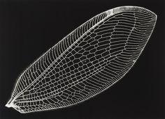 Kazuyuki Soeno - fossil of light