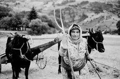 Tülin Dizdaroğlu : Anadolu Kadını Güncesi 8 : Kağnı Peşinde   fotoritim arşiv