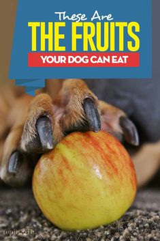 What fruits can dogs eat? Here's a whole bunch of choices you can feed your dog as an occasional natural treat in moderation (and their health benefits). Fruit Dogs Can Eat, Can Dogs Eat, Homemade Dog Treats, Pet Treats, Dog Diet, Natural Dog Food, Dog Eating, Dog Supplies, Dog Care