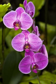 tropical plants and flowers | ... which has all kinds of orchids and other beautiful rainforest plants