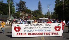 67th Sebastopol Apple Blossom Festival & Parade at Ives Park in Sebastopol, CA on Apr 20, 2013 - EventCrazy.com