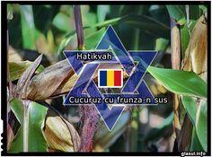 SURPRIZ?: Imnul Israelului este o prelucrare a unui c?ntec popular rom?nesc � �Cucuruz cu frunza-n sus�. VIDEO National Anthem, Romania, Israel, The Originals
