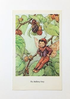 Mulberry Flower Fairy Picture, Vintage Bookplate, Flower Fairy, nursery art, Cicely Mary Barker by PeonyandThistlePaper on Etsy https://www.etsy.com/listing/198290959/mulberry-flower-fairy-picture-vintage