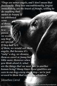 """inspirational quote on dogs from Carroll """"Dogs are angels"""" Instagram@sharkymarkybook"""