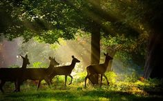 So pretty, I wish deer walked through my yard like this. Wait, no I don't, my dogs would go crazy, lol.