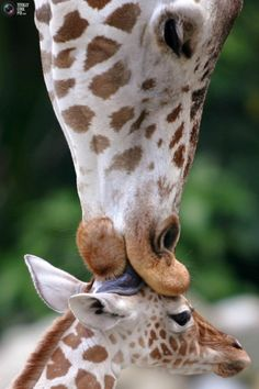 sweet kiss from mama