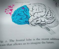 For the first time in a million years, the brilliant networks of the Brain started developing in specific ways, witnessing the formation of the very first Frontal Lobe. Planning Center, Frontal Lobe, Brain, Poetry, Knowledge, Healing, Wisdom, God, Thoughts