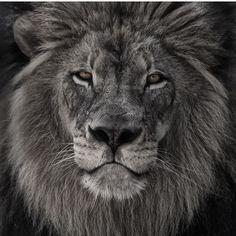 """""""King"""" by Jonathan Truong https://instagram.com/p/0sjWDxofvR/"""