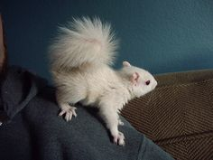 Most cutest white squirrel ever! If Brie was a squirrel this would be her!