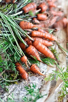 vvv Carrot- the last crops from my garden.