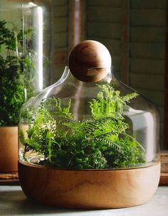 Terrarium Ideas and Inspiration {Easy DIY Ideas for Indoor Gardens} - bystephanielynn