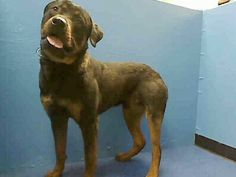 Manhattan NY.  TIM.  Male.  10 mths.  Dies in a.m.  See Urgent Part 2 on fb.***RESCUED***