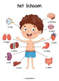 Body Parts Preschool Activities, Body Preschool, Learn Dutch, Nurse Party, Dutch Language, Human Anatomy And Physiology, School Posters, Body Systems, Kids Education