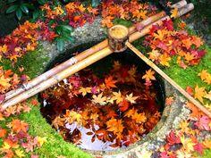 大徳寺塔頭高桐院の手水鉢