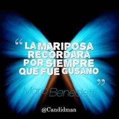 """""""La #Mariposa recordará por siempre que fue #Gusano"""". #MarioBenedetti #FrasesCelebres @candidman"""