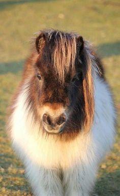 fuzzy pony! ✿⊱╮