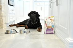 Rejoice In The Dog Food Aisle With New Beneful Recipes http://athriftydiva.com/beneful-recipes/ #FriendsofBeneful #ad