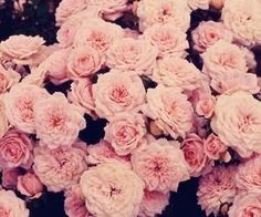 #pinkflowers #beauti