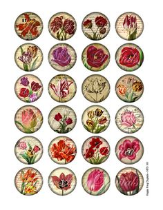 Vintage tulip illustration - downloadable collage sheets for you to print and use for your crafting projects -- card making, jewelry making -