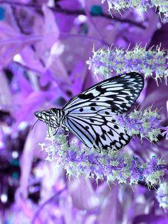 #Butterfly | #Butterflies | #Moths Butterfly Wings of Fancy by Roy and Dolores Kelley