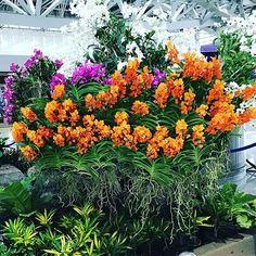 gigi._hgood,foodie,心情,caughtattention,favourite,植物,brightcolors,花,relaxday,越南麵包,mouthwatering,芬芳,放鬆,喜愛,plants,引起注意,crunchy,脆,色彩繽紛,vietnamese,美食,scentsFlowers💐#Plants#Scents#BrightColors#CaughtAttention#RelaxDay#Good#Foodie#Vietnamese#favourite #Crunchy#MouthWatering#花#植物#芬芳#色彩繽紛 #引起注意#放鬆#心情#美食#喜愛#脆#越南麵包